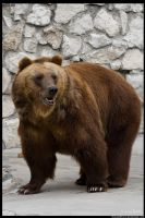 Brown Bear by OrangeRoom