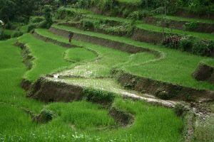 Fields that feed a nation .. by bingbing51