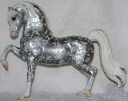 Breyer Celebration 1 of 5 Stock ~ Sherman Morgan by Lovely-DreamCatcher