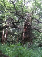 Sherwood Forest 2 by Scellanis