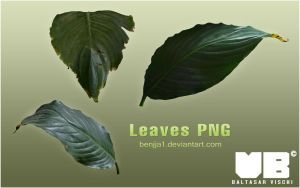 LEAVES PNG by BaltasarVischi