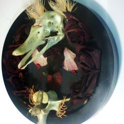 duck skull mount with moth and roses by resonanteye