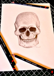 Skull Pencil Drawing by CanadianEhh