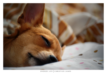 Snooze Life by MagicJunkie007