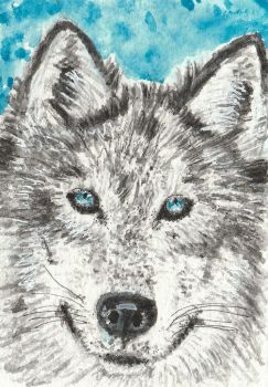 Wolf  face watercolor  ACEO painting by tulipteardrops