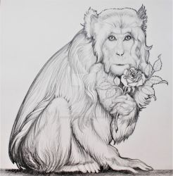 Valentines Day Macaques  by HouseofChabrier