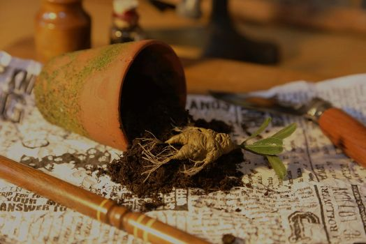 Harry Potter - Herbology for Beginners (b) by pocko-85
