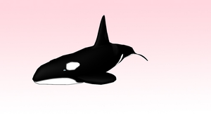 MMD shamu! (killer whale) by amiamy111