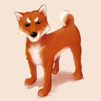 DC What are you looking at? | Shiba Inu OC by BiteMeFox