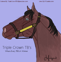 Triple Crown TB's by MollyMay335