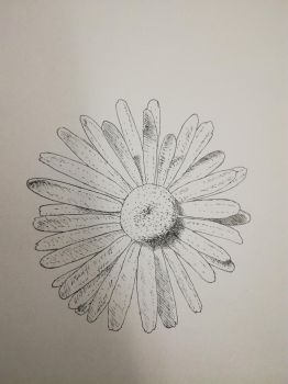 Inktober 2017, Day 13: Daisy by GLangGould