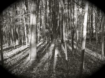 Worcester Woods 8 by scarygirl67