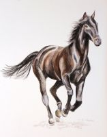 Horse - Watercolour by christina-0o