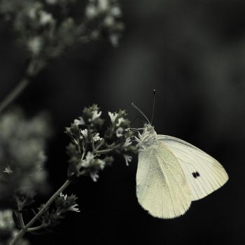 Buttery Fly by light-recycled