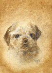 aceo shih tzu by kailavmp