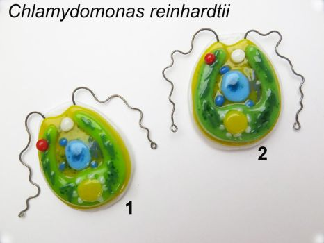 Chlamydomonas reinhardtii fused glass pendants by trilobiteglassworks
