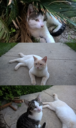 My 3 spoiled cats by Jazmir97