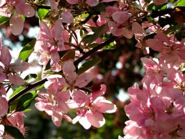 Best Time in the Spring by Michies-Photographyy