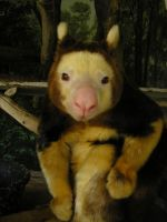 Tree Kangaroo by ravingblackbird