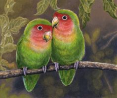 Rosy-Faced Lovebirds by WillemSvdMerwe