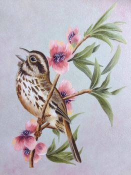 Song Sparrow oil painting by Ned-The-Hat