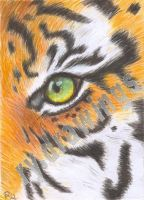 Eye of the tiger by Hydrargirum16