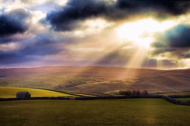 Yorkshire Gold by Capturing-the-Light