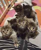 All this cute kitties from this cat mom! by mockingbirdontree