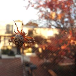 Morning Spider by i-am-enrooted