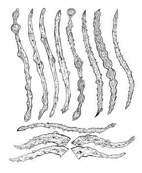 Ultimate_evil_tentacle_brushes by pebe1234