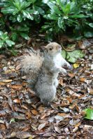 Squirrel by tsb-stock