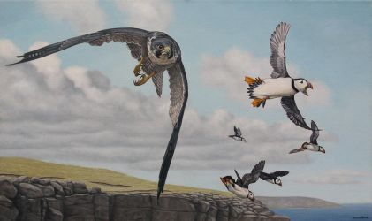 Peregrine and puffins. Oil on canvas. by painterman33