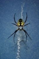 The spider in the window by Chezhnian