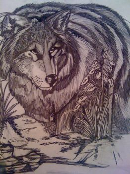 Wolf in the Wilderness by golucky05
