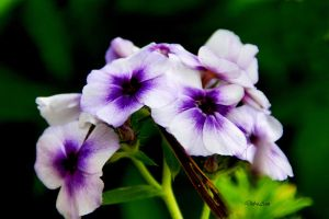 Purple Centres by Deb-e-ann
