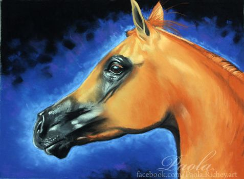 Arabian Horse pastel painting by skippypoof