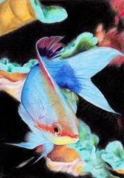 #010: fish by Sillageuse
