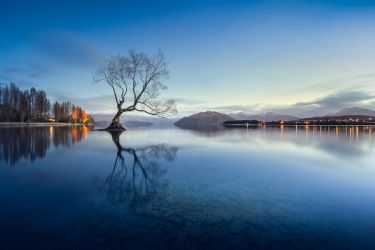 the willow tree by Katoman