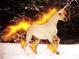 A REAL Rapidash Appeared