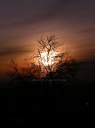 Sunset and Tree by MichaFire