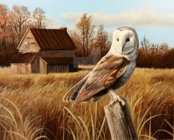 Abandoned Homestead, Barn Owl by pm3013