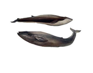 1800's Whales 3 PNG by chaseandlinda