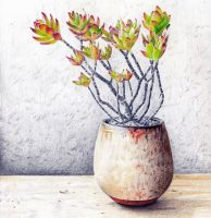 Succulents in a vase - color pencils by KingVahagn