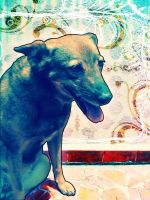 My Dog by isca