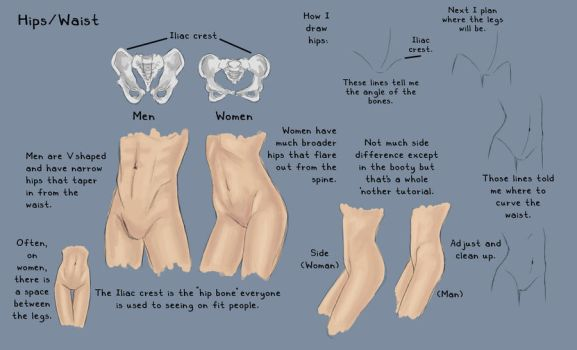 Hips Waist - Study by KinderCollective