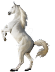 WHITE STALLION HORSE by Aim4Beauty