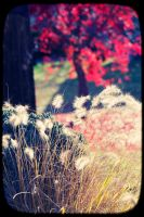 Beautiful Autumn Day by nprkr