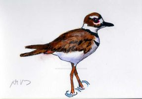 Another drawing of George the Killdeer by Desertdarlene