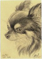 Chihuahua Portrait IV by honeymil