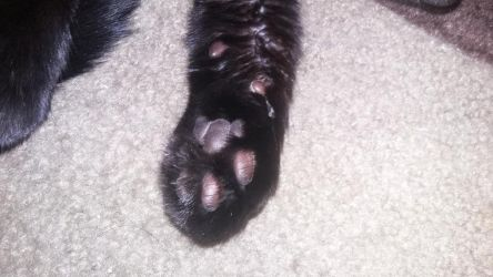 my cats toebeans by Mr-Kumalover